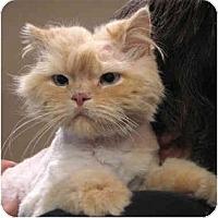 Adopt A Pet :: Cicero - Davis, CA
