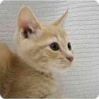 Adopt A Pet :: Jones - Modesto, CA