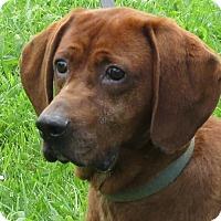 Adopt A Pet :: Hank - Bristol, TN