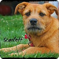 Adopt A Pet :: Scarlett - East Smithfield, PA