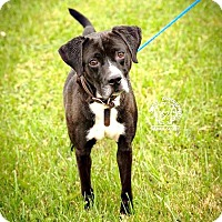 Adopt A Pet :: Rascal - RESCUED! - Zanesville, OH