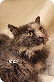 Domestic Mediumhair Cat for adoption in Foothill Ranch, California - Janis
