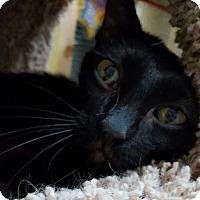 Adopt A Pet :: Smidgen - Henderson, KY