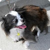 Adopt A Pet :: Flash - Umatilla, FL
