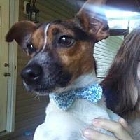 Adopt A Pet :: Theodore/CP - Columbia, TN