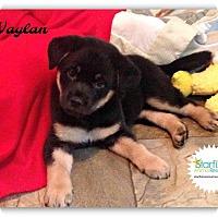 Adopt A Pet :: Waylan - Plainfield, IL