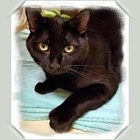 Adopt A Pet :: Umbro - Winchester, CA