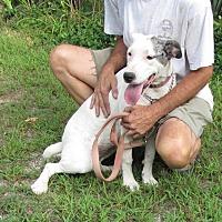 Adopt A Pet :: Baby Ruth - Oakland, AR