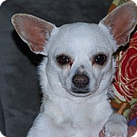 Adopt A Pet :: Lily - New Milford, CT