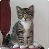 Adopt A Pet :: Cute boy - Etobicoke, ON