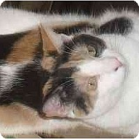 Adopt A Pet :: Lovely Lily - Jenkintown, PA