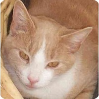 Adopt A Pet :: Duncan - Vails Gate, NY