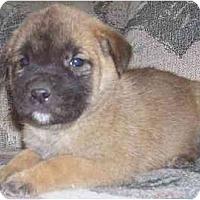 Adopt A Pet :: Kat - Evansville, IN