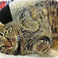 Adopt A Pet :: Winston - Warren, OH