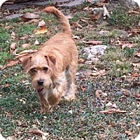 Adopt A Pet :: STEWART - Salt Lake City, UT
