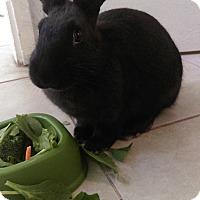Adopt A Pet :: Cherry - Williston, FL