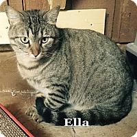 Adopt A Pet :: Ella - Bentonville, AR