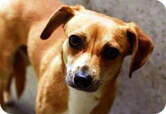 Terrier (Unknown Type, Medium) Mix Dog for adoption in Bellevue, Washington - Willoughby