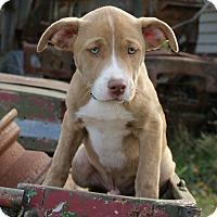 Adopt A Pet :: Sherman - Dayton, OH