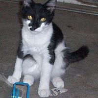 Adopt A Pet :: Muffin - Morriston, FL