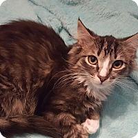 Adopt A Pet :: Wendy - Trevose, PA