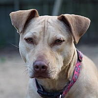 Adopt A Pet :: Millie - Demopolis, AL