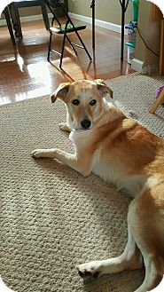 Collie Mix Dog for adoption in Holland, Ohio - Maddie