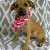 Adopt A Pet :: Molly - Lawrenceville, GA
