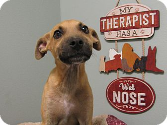 Black Mouth Cur Mix Puppy for adoption in South Dennis, Massachusetts - Kirby Benner