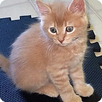 Adopt A Pet :: Finn - Burgaw, NC