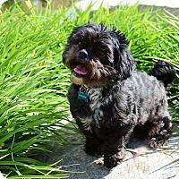 Adopt A Pet :: Grissom - Calgary, AB