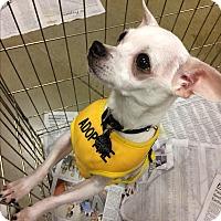 Adopt A Pet :: Billy Boy - Durham, NC