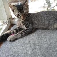 Adopt A Pet :: Danny - Columbia, SC