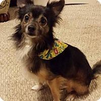 Adopt A Pet :: Bernie - Evansville, IN