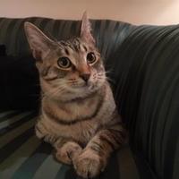 Adopt A Pet :: Oliver - Davie, FL