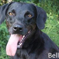 Adopt A Pet :: Bella - Tahlequah, OK