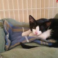 Adopt A Pet :: Murphy - Waupun, WI