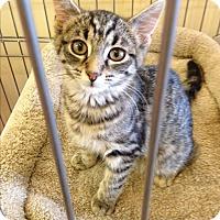 Adopt A Pet :: Jenn - Edgewater, NJ