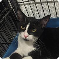 Adopt A Pet :: Zoey - Boca Raton, FL