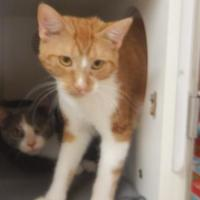 Adopt A Pet :: 9924 Chloe - Erie, PA