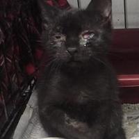 Adopt A Pet :: Crowell - Clarkesville, GA