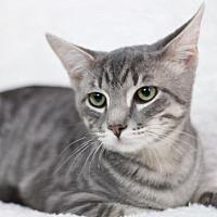 Adopt A Pet :: Snap H - Raleigh, NC