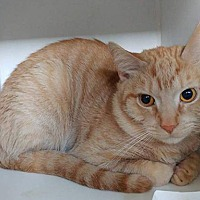 Adopt A Pet :: Nugget - Middletown, NY