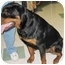 Photo 2 - Rottweiler Dog for adoption in Naples, Florida - Bubba