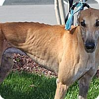Adopt A Pet :: Keith Richards