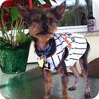 Adopt A Pet :: Tim-E - Ocala, FL