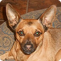 Adopt A Pet :: DJ - Arenas Valley, NM