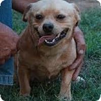 Adopt A Pet :: Mutley - Staunton, VA