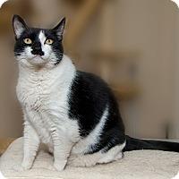 Adopt A Pet :: Mia - Fountain Hills, AZ