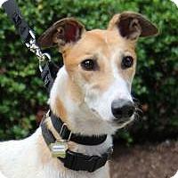 Adopt A Pet :: Sheldon - Nashville, TN
